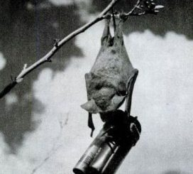 Bat Bomb - Weird Weapon