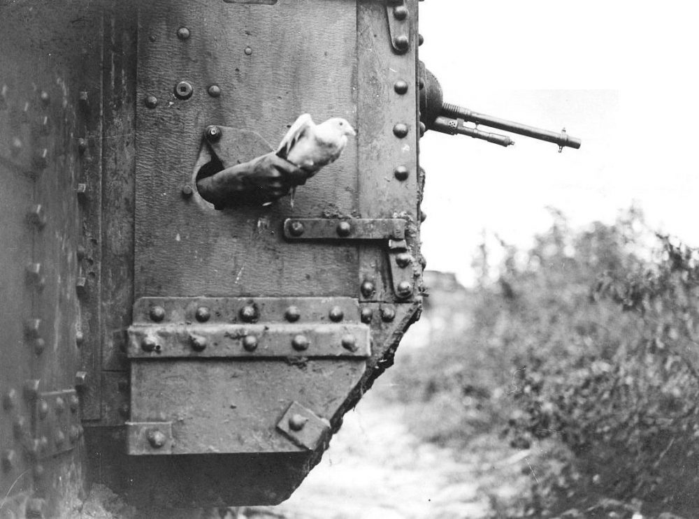 Messages continued to be relayed by carrier pigeon throughout the war. Seen here being released from a British tank at the Battle of Amiens.